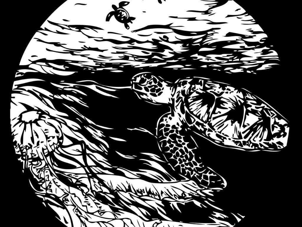 Square_turtle